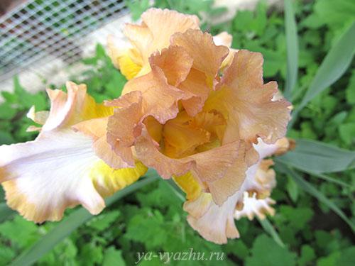 Красивые цветы из нашего сада