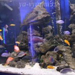 Рыбки из анапского океанариума