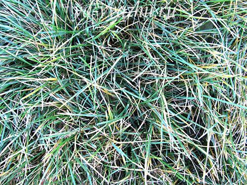 Травушка-муравушка осенью